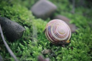 Snail and the Pebble by DawidRayFriebe