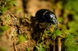 Black bug by somna-ARTifacts
