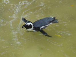 Penguin by Horselover60-Stock