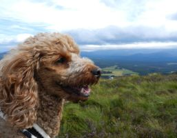 Ruby in the Cairngorms by Hazelnut-Eyes