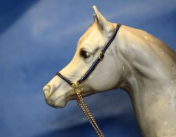 PAM with an arabian halter by Afuze