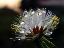 after rain 3 by sinanTR