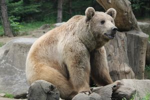 Bear 5 by Linay-stock