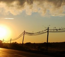 Birds On The Wires by PaulMcKinnon