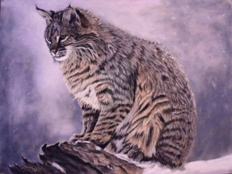 Cold Bobcat by MsTechArt