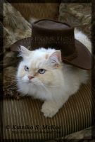 Cowboy Kitty by Kumiko-Art