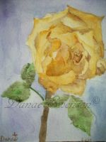 Yellow Rose by Thunderpaws101