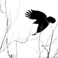 As the Crow Flies by Twilights-Maiden