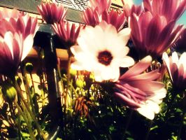 flowers by SuperPsycoLoveAddict