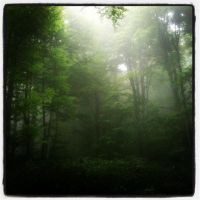 forest by Pithana