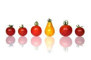 Family Tomatoes by NumericArt