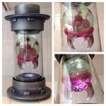 Metroid Hatchling in containment cylinder by Timbone