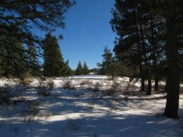Snowscape 11 -- Nov 2009 by pricecw-stock