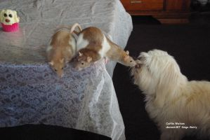 Dog and Rat touch noses by Lord-Lingo
