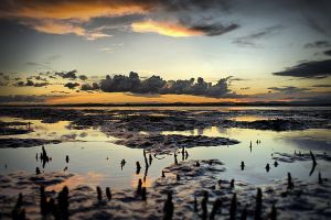 Hays inlet__a crabs eye view by gorkath