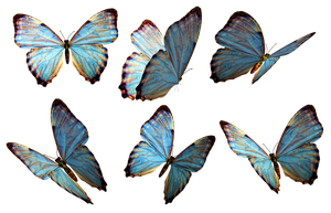 Butterflies 2 PNG Stock by Roy3D