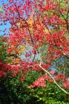 Autumn Leaves Stock by aegiandyad