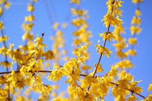 Yellow over blue by Jorapache