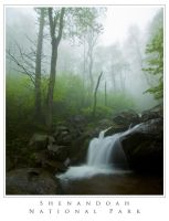 Misty Morning Stream by biological