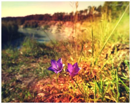 the flowerdays VII by Bodhisattvacary