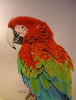 Green-winged Macaw by PenguinSagittarius