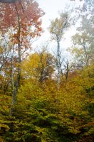 White Mountains  Fall Foliage  010 by FairieGoodMother