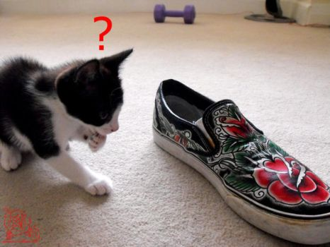 kitty vs vans by lorddamian