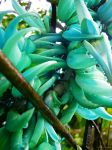 jade vine5 by izha