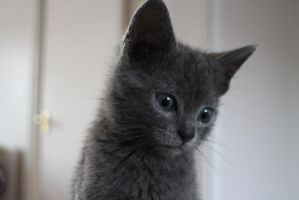 Cinders the Kitten again! by Grell89