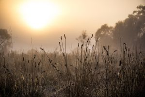 Oakey Hill sunrise by RosieMoonshine