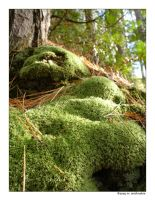 Moss  - Red Pine Lake by fragilemuse-org