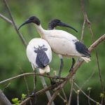 Ibis Lookout by KarlDawson