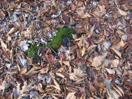 Texture - Leaf Litter by markopolio-stock