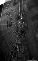 Web by joanchris