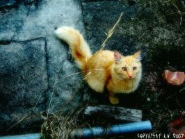 Ginger - saturated by RainaAstaldo