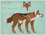 Shiloh ref by Terrierking