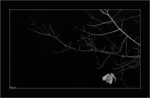 The Last Leaf by hesitation