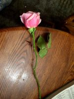 pink rose 2 by turtledove-stock