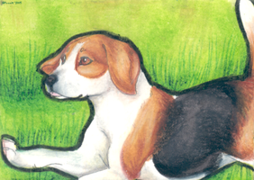 Running Free - ACEO Trade by PoonieFox