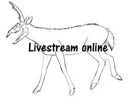 Livestream :online by xXNuclearXx