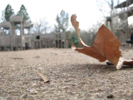 Leaves by FlawlessInnoncence