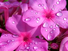 Good Morning Dew by Renay89