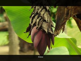 Banana Flower by Xiox231