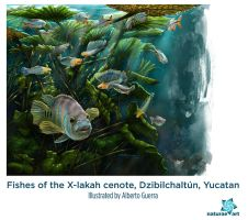 Xlakah fishes by albertoguerra