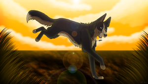 .: Run :. by MorningAfterWolf