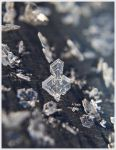 Natures Frosty Lace by GrotesqueDarling13