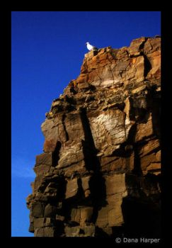 Seagull and Rock by chaoticparadox