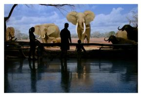 NHM Elephants by makepictures