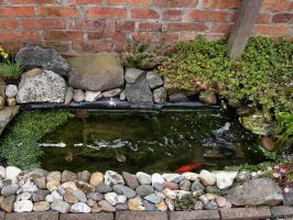 My Little Pond April 2016 by Thelma1