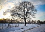 Winter must be cold by thomasdelonge